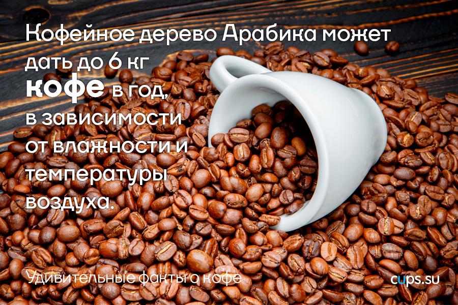 Кофейное дерево дает 6 кг. кофе