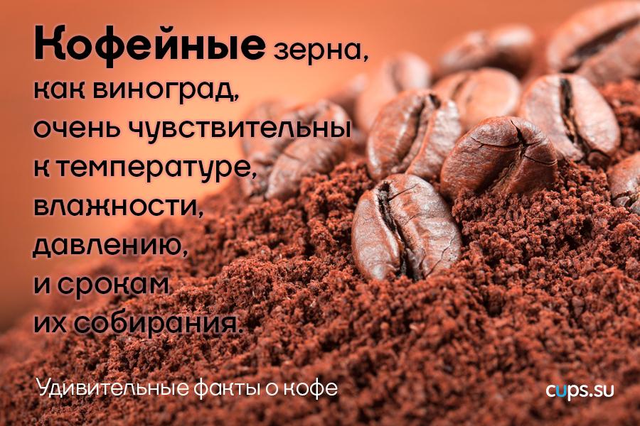 Кофейные зерна, как виноград, очень чувствительны к температуре
